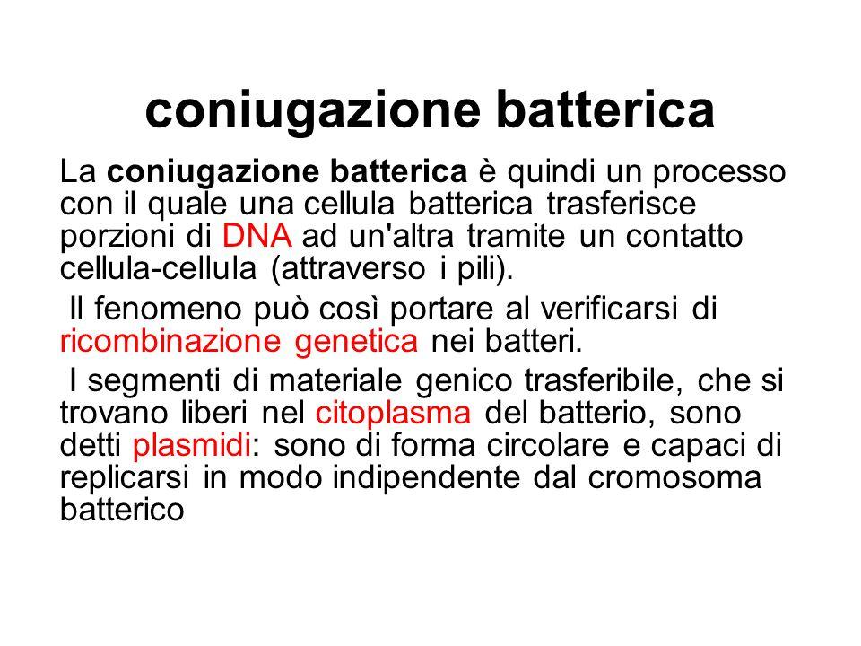 coniugazione batterica La coniugazione batterica è quindi un processo con il quale una cellula batterica trasferisce porzioni di DNA ad un'altra trami