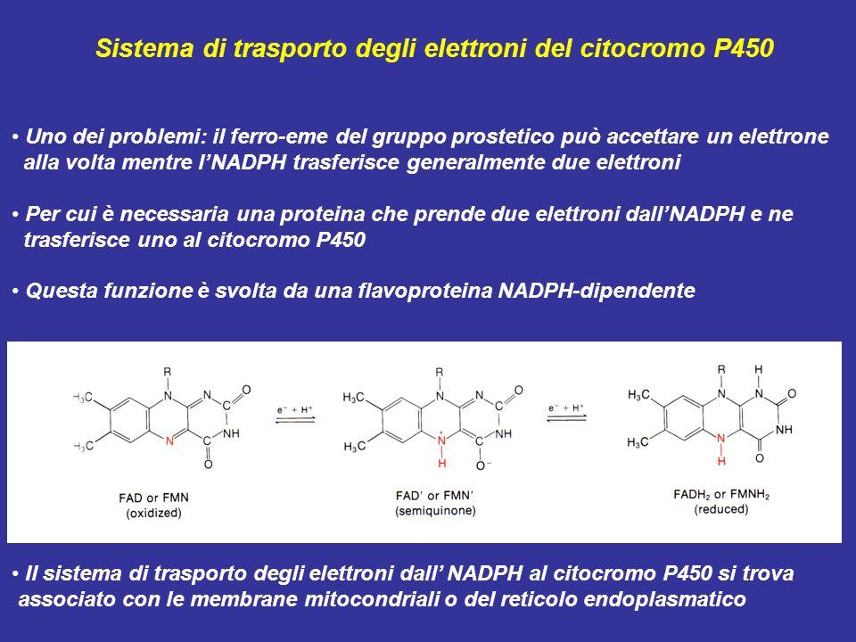 Sistema di trasporto degli elettroni del citocromo P450 Uno dei problemi: il ferro-eme del gruppo prostetico può accettare un elettrone alla volta men