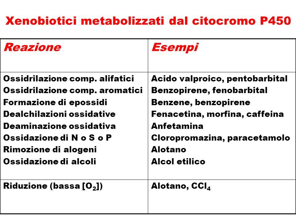 ReazioneEsempi Ossidrilazione comp. alifatici Ossidrilazione comp. aromatici Formazione di epossidi Dealchilazioni ossidative Deaminazione ossidativa
