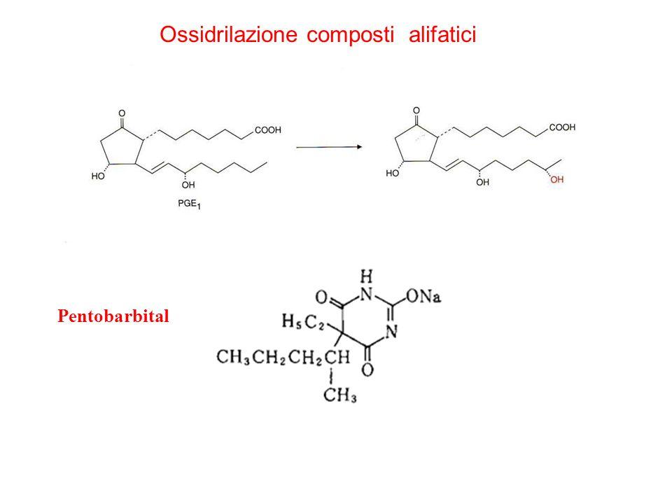 Ossidrilazione composti alifatici Pentobarbital