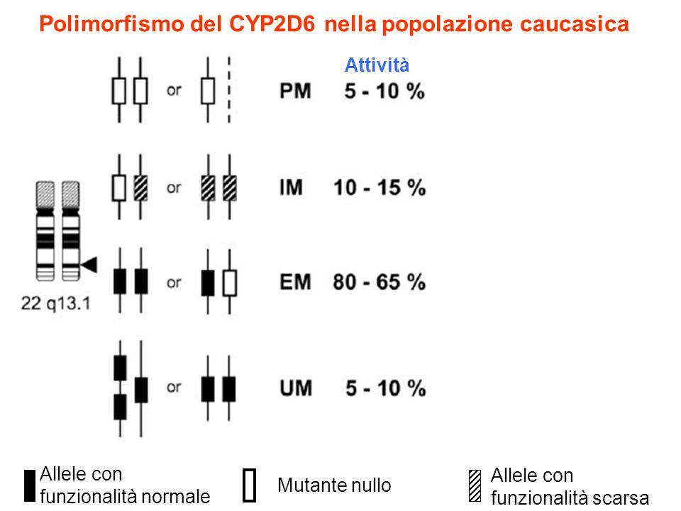 Polimorfismo del CYP2D6 nella popolazione caucasica Allele con funzionalità scarsa Mutante nullo Allele con funzionalità normale Attività