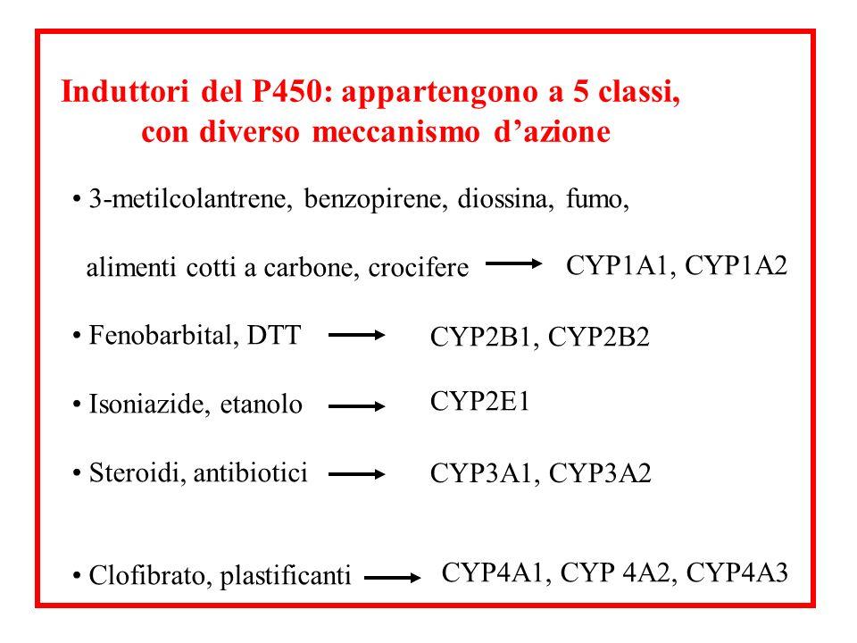 3-metilcolantrene, benzopirene, diossina, fumo, alimenti cotti a carbone, crocifere Fenobarbital, DTT Isoniazide, etanolo Steroidi, antibiotici Clofib