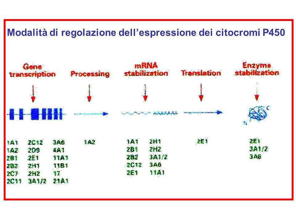 Modalità di regolazione dellespressione dei citocromi P450