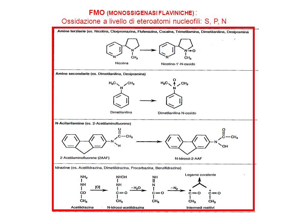FMO (MONOSSIGENASI FLAVINICHE) : Ossidazione a livello di eteroatomi nucleofili: S, P, N