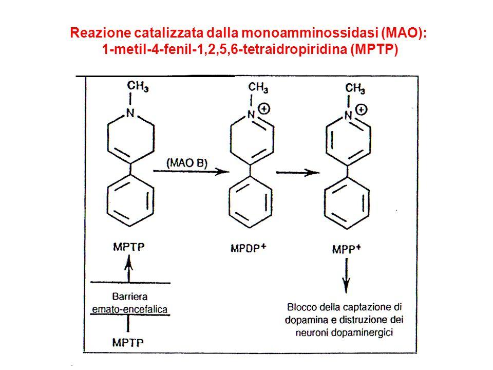 Reazione catalizzata dalla monoamminossidasi (MAO): 1-metil-4-fenil-1,2,5,6-tetraidropiridina (MPTP)
