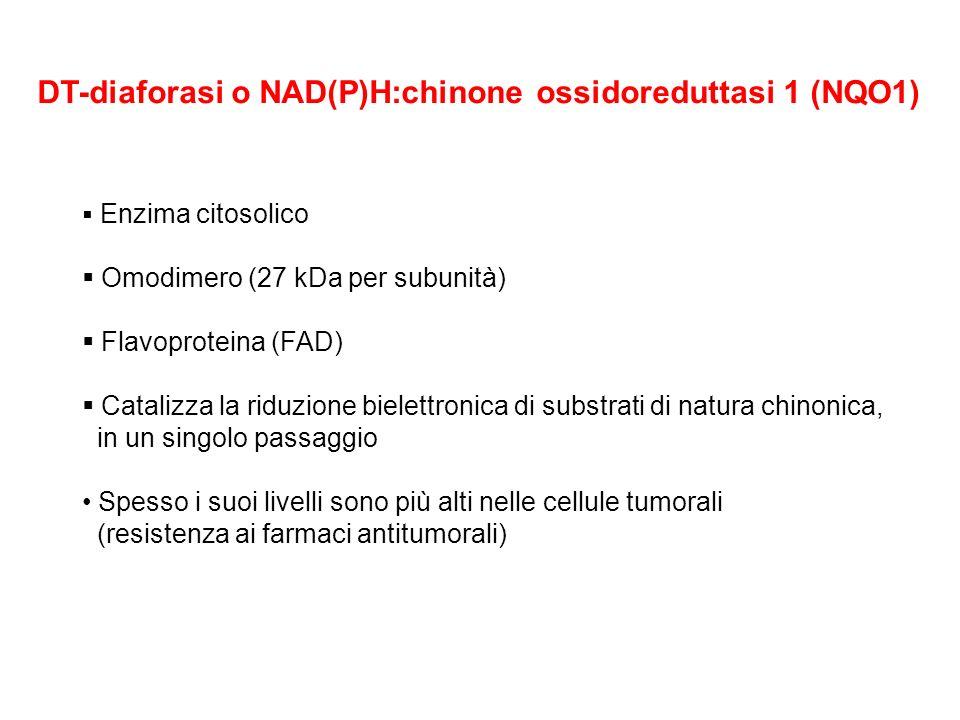 DT-diaforasi o NAD(P)H:chinone ossidoreduttasi 1 (NQO1) Enzima citosolico Omodimero (27 kDa per subunità) Flavoproteina (FAD) Catalizza la riduzione b