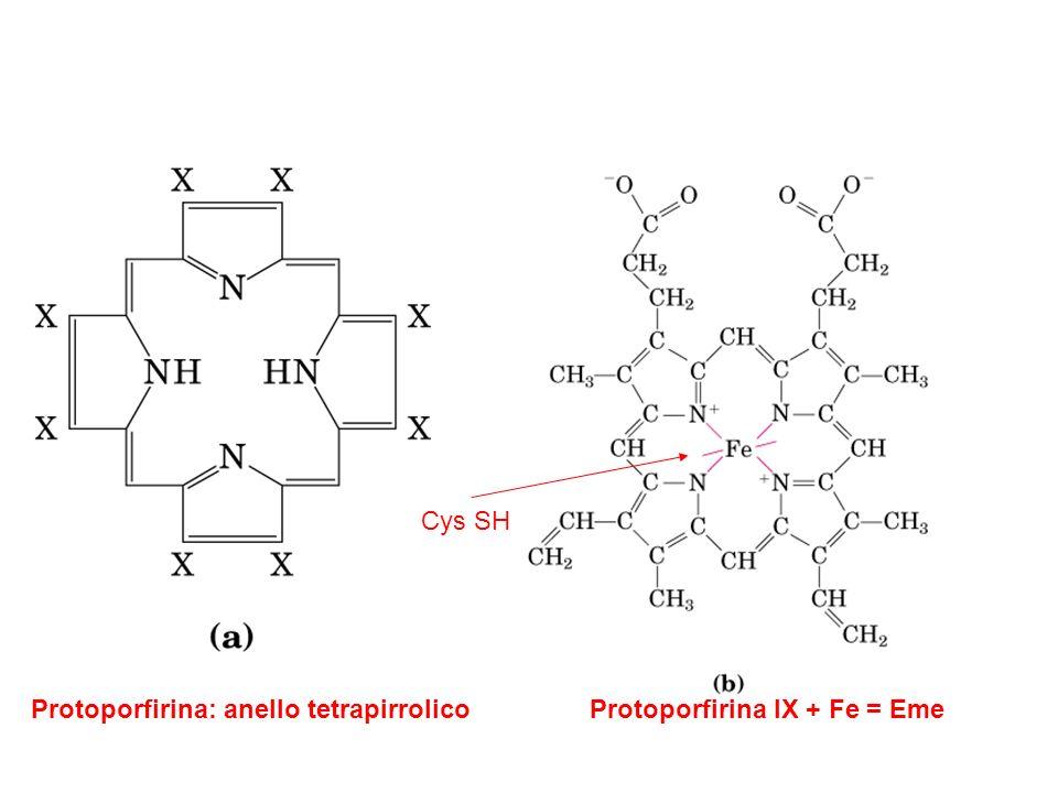 Protoporfirina: anello tetrapirrolicoProtoporfirina IX + Fe = Eme Cys SH
