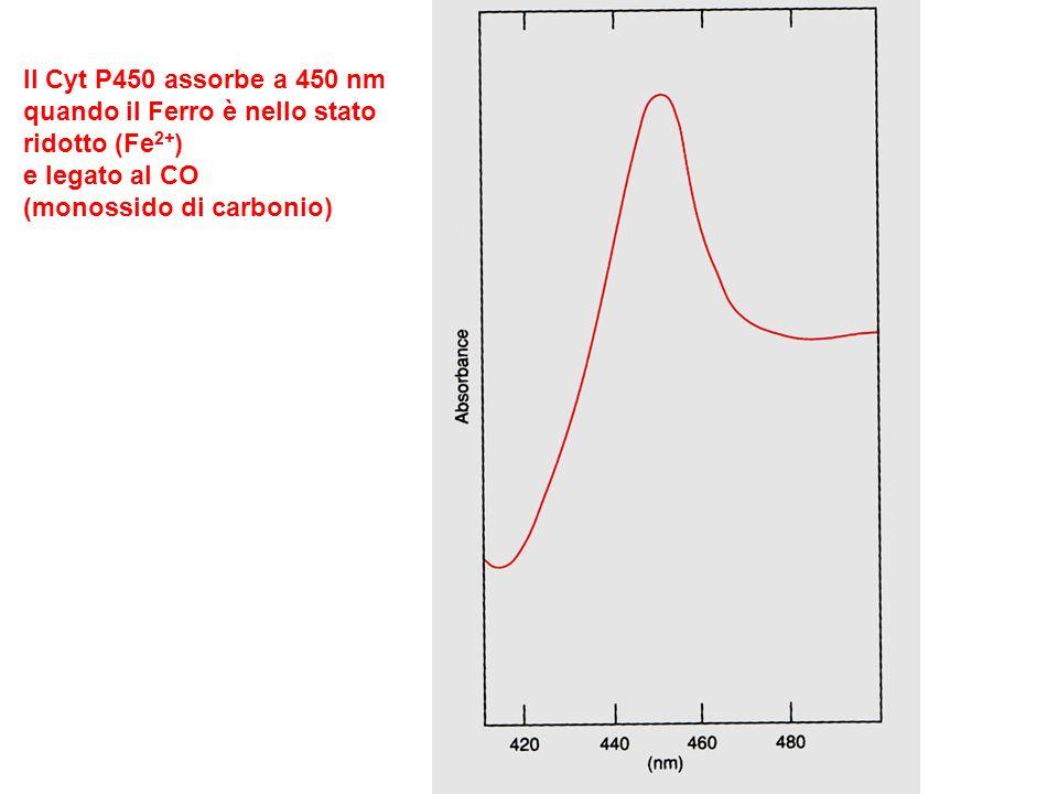 Il Cyt P450 assorbe a 450 nm quando il Ferro è nello stato ridotto (Fe 2+ ) e legato al CO (monossido di carbonio)