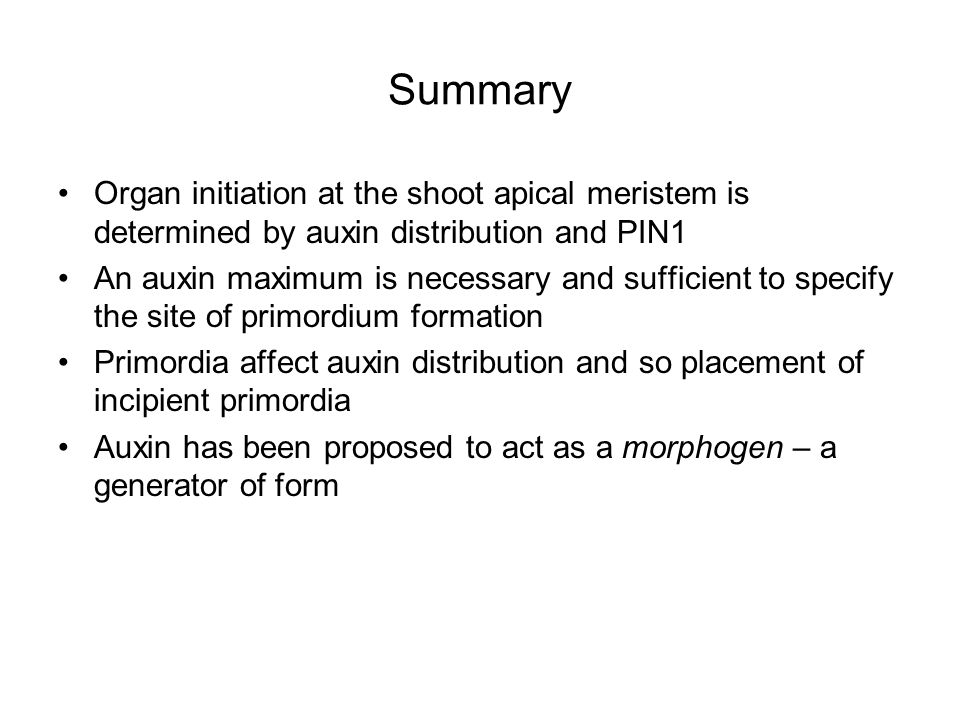 Summary Organ initiation at the shoot apical meristem is determined by auxin distribution and PIN1 An auxin maximum is necessary and sufficient to specify the site of primordium formation Primordia affect auxin distribution and so placement of incipient primordia Auxin has been proposed to act as a morphogen – a generator of form
