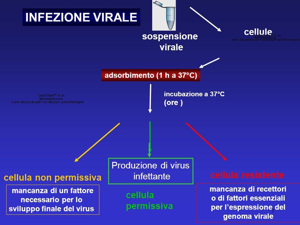 1 INFEZIONE VIRALE adsorbimento (1 h a 37°C) cellule cellula non permissiva mancanza di un fattore necessario per lo sviluppo finale del virus cellula