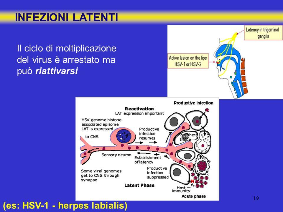 19 INFEZIONI LATENTI Il ciclo di moltiplicazione del virus è arrestato ma può riattivarsi (es: HSV-1 - herpes labialis)