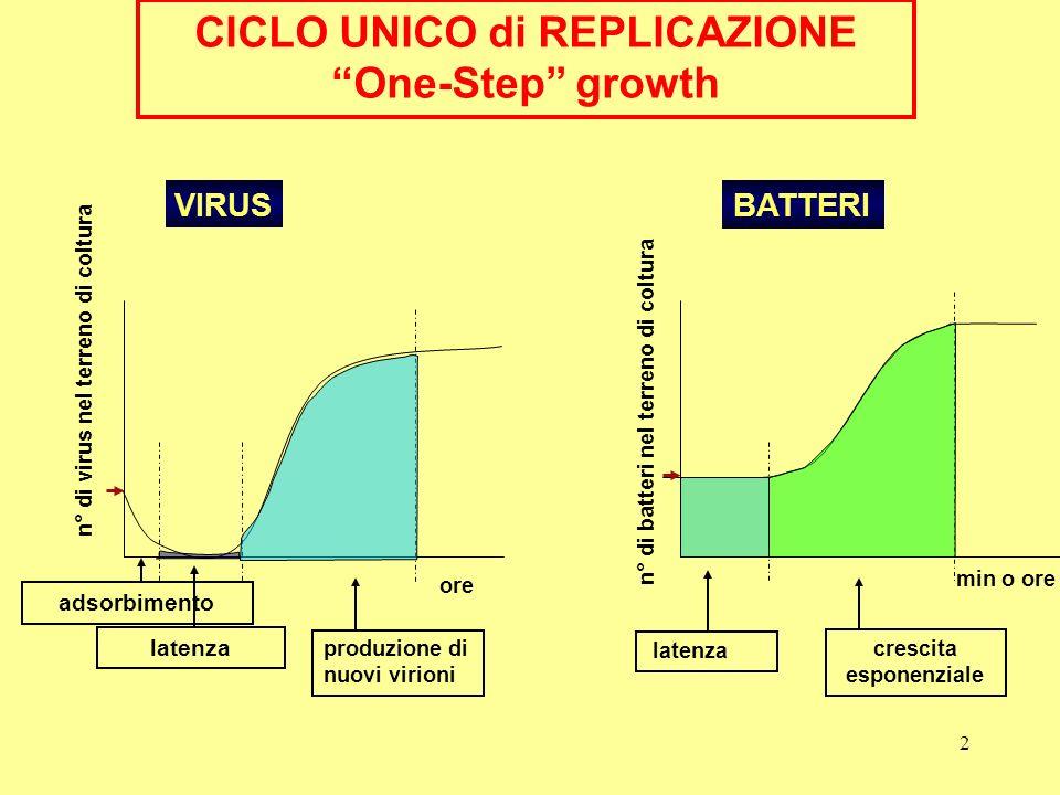 2 latenza produzione di nuovi virioni VIRUS n° di virus nel terreno di coltura ore CICLO UNICO di REPLICAZIONE One-Step growth adsorbimento BATTERI la