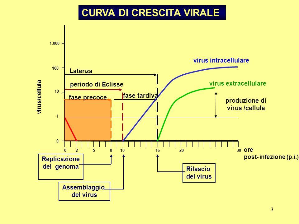 3 0 2 5 8 10 16 20 30 0 1 10 100 1.000 virus/cellula ore post- infezione (p.i.) fase tardiva periodo di Eclisse fase precoce Replicazione del genoma p
