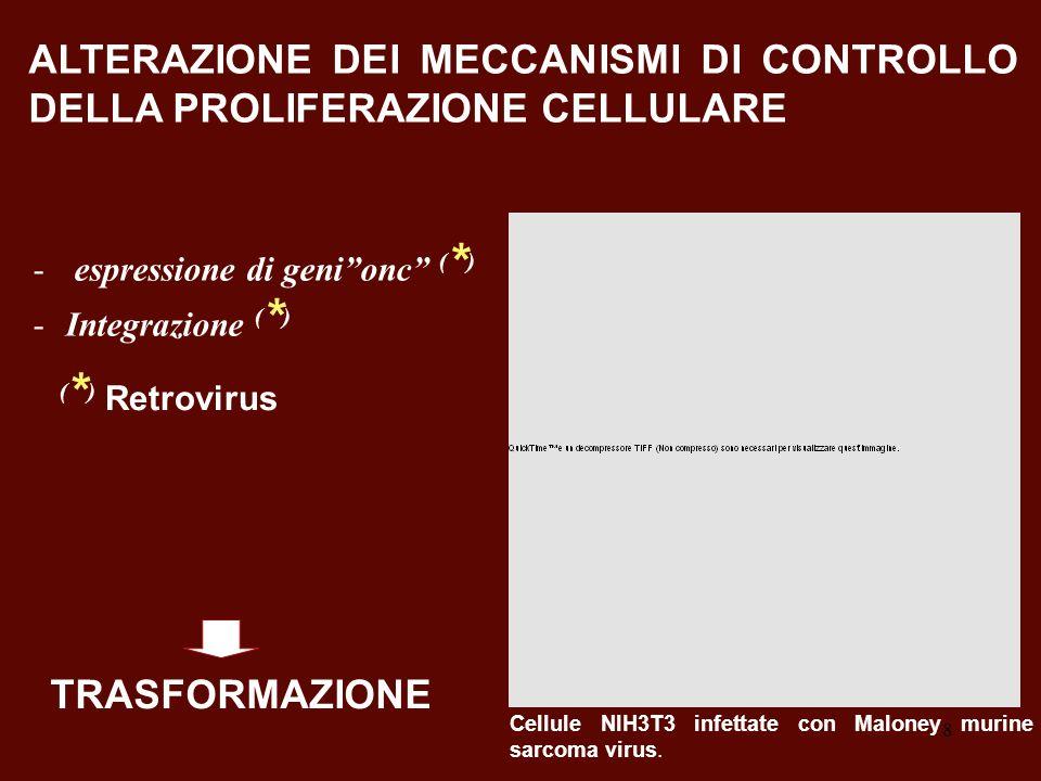 8 ALTERAZIONE DEI MECCANISMI DI CONTROLLO DELLA PROLIFERAZIONE CELLULARE Cellule NIH3T3 infettate con Maloney murine sarcoma virus. ( * ) Retrovirus -