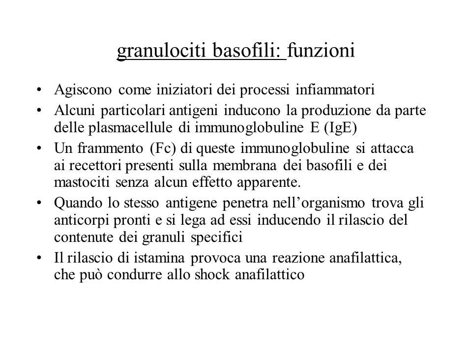 granulociti basofili: funzioni Agiscono come iniziatori dei processi infiammatori Alcuni particolari antigeni inducono la produzione da parte delle pl