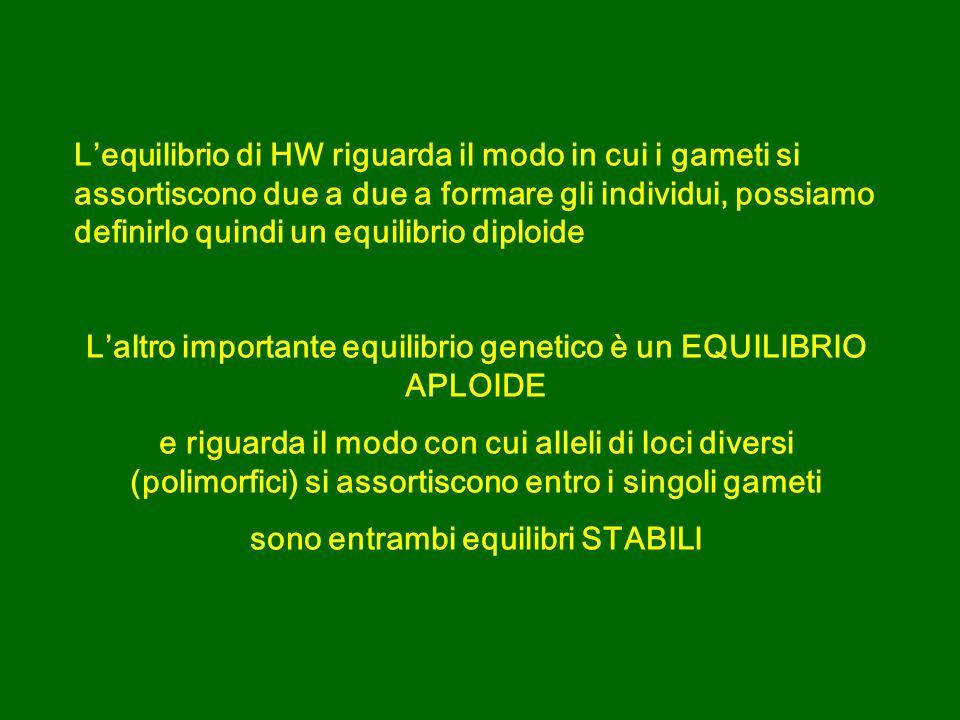 Lequilibrio di HW riguarda il modo in cui i gameti si assortiscono due a due a formare gli individui, possiamo definirlo quindi un equilibrio diploide Laltro importante equilibrio genetico è un EQUILIBRIO APLOIDE e riguarda il modo con cui alleli di loci diversi (polimorfici) si assortiscono entro i singoli gameti sono entrambi equilibri STABILI