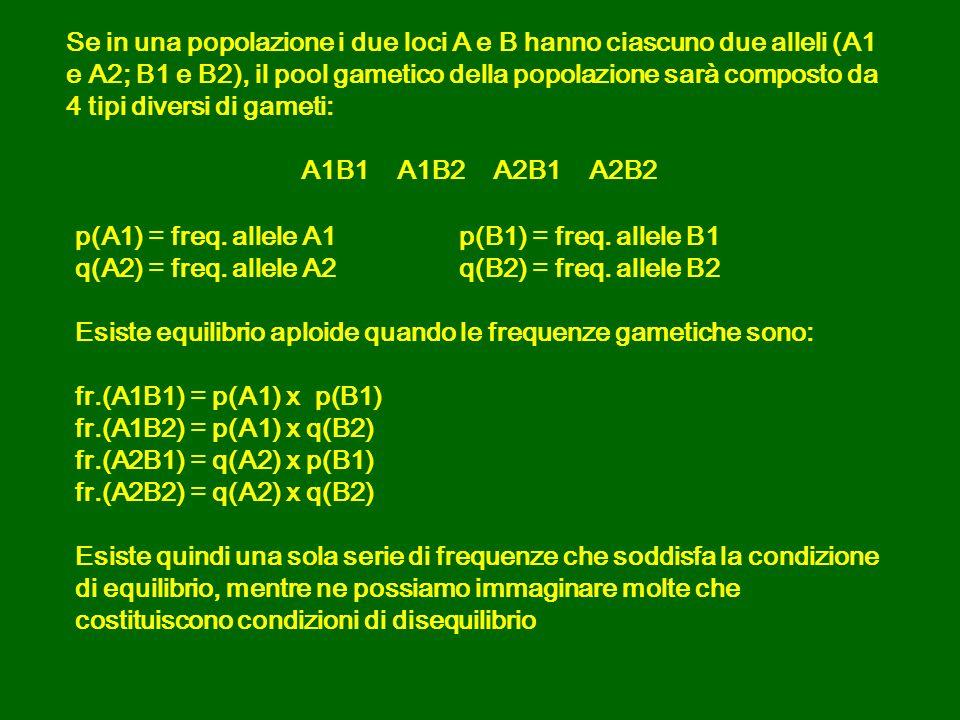 p(A1) = freq.allele A1p(B1) = freq. allele B1 q(A2) = freq.
