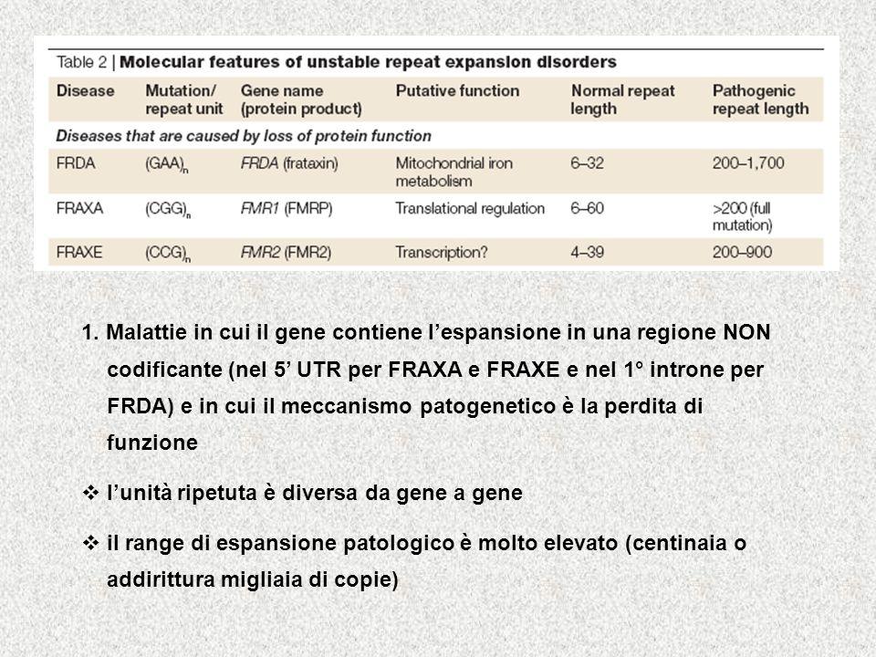 1. Malattie in cui il gene contiene lespansione in una regione NON codificante (nel 5 UTR per FRAXA e FRAXE e nel 1° introne per FRDA) e in cui il mec