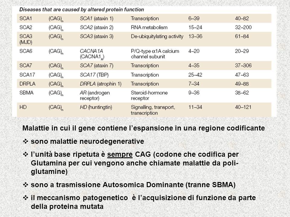 Malattie in cui il gene contiene lespansione in una regione codificante sono malattie neurodegenerative lunità base ripetuta è sempre CAG (codone che