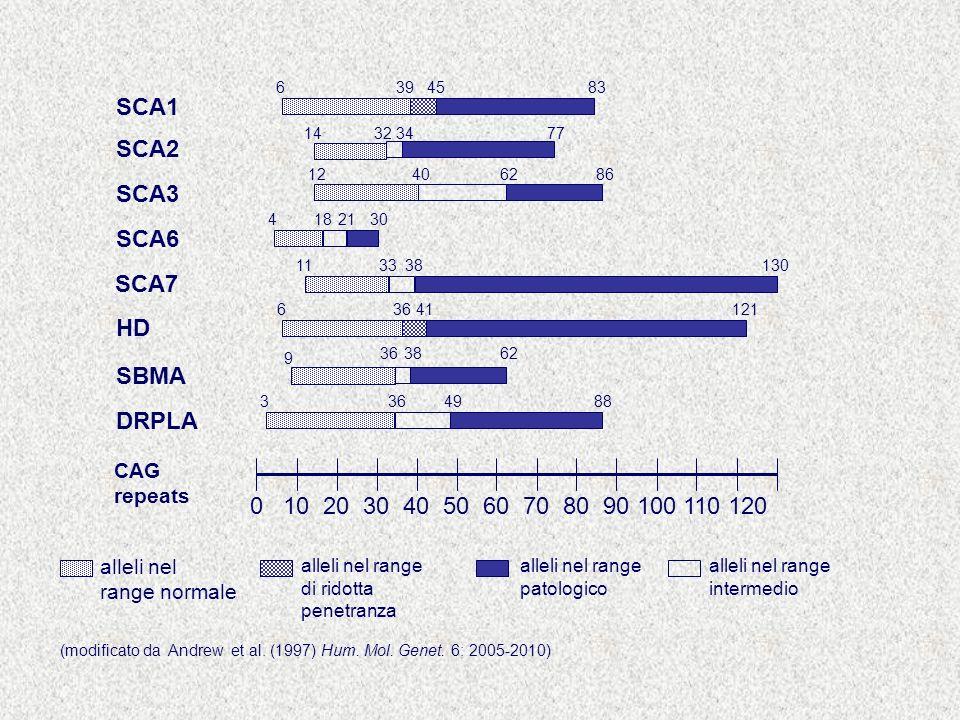 0 10 20 30 40 50 60 70 80 90 100 110 120 CAG repeats alleli nel range normale alleli nel range di ridotta penetranza SCA2 14323477 SBMA 9 363862 DRPLA