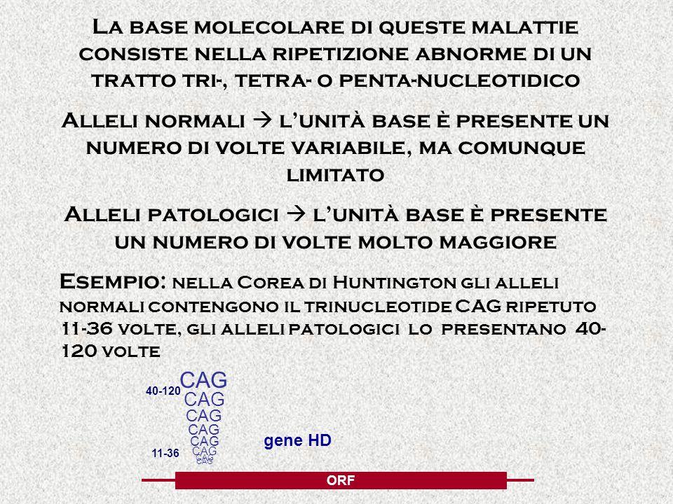 La base molecolare di queste malattie consiste nella ripetizione abnorme di un tratto tri-, tetra- o penta-nucleotidico Alleli normali lunità base è p