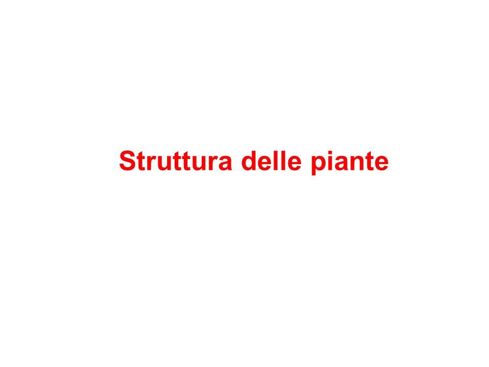 Struttura delle piante