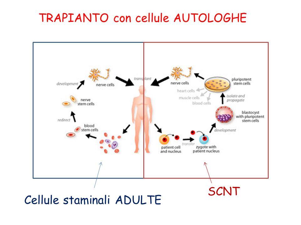 TRAPIANTO con cellule AUTOLOGHE Cellule staminali ADULTE SCNT
