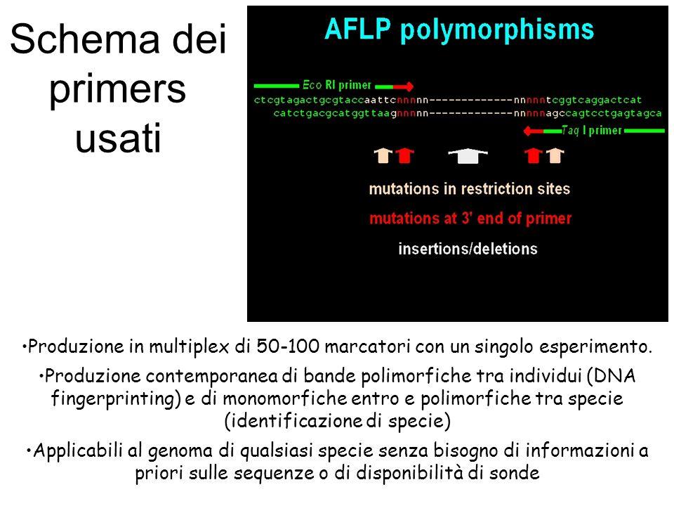 Produzione in multiplex di 50-100 marcatori con un singolo esperimento. Produzione contemporanea di bande polimorfiche tra individui (DNA fingerprinti