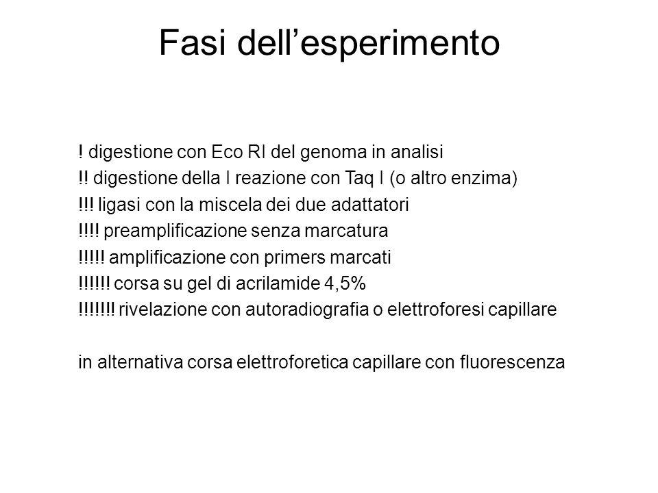 Fasi dellesperimento ! digestione con Eco RI del genoma in analisi !! digestione della I reazione con Taq I (o altro enzima) !!! ligasi con la miscela