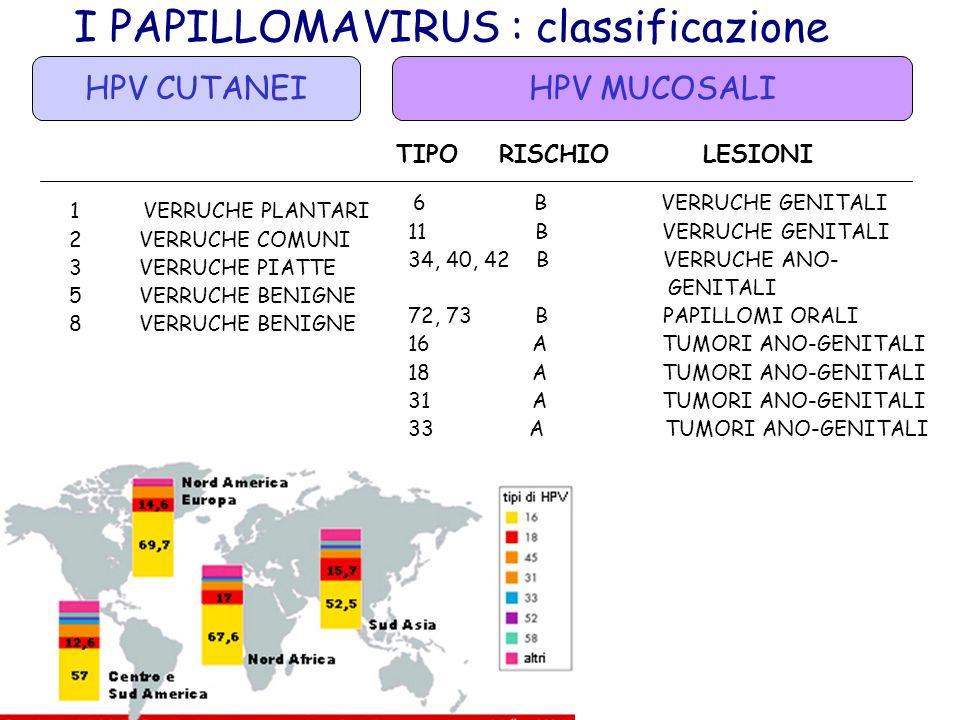 I PAPILLOMAVIRUS : classificazione HPV CUTANEI TIPO LESIONI TIPO RISCHIO LESIONI 1 VERRUCHE PLANTARI 2 VERRUCHE COMUNI 3 VERRUCHE PIATTE 5 VERRUCHE BE