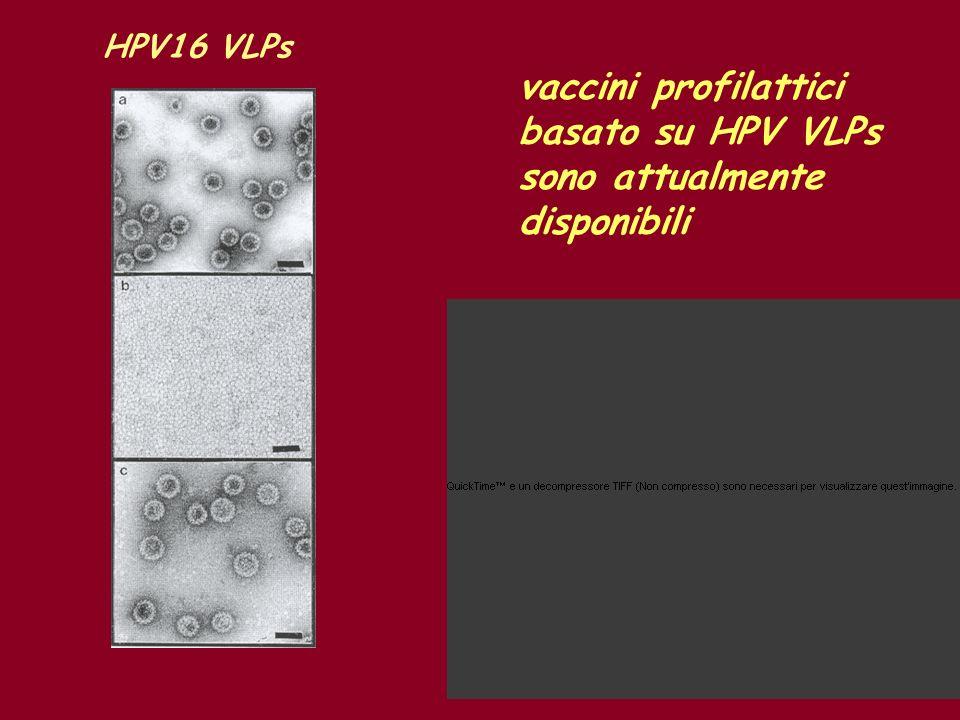 vaccini profilattici basato su HPV VLPs sono attualmente disponibili HPV16 VLPs