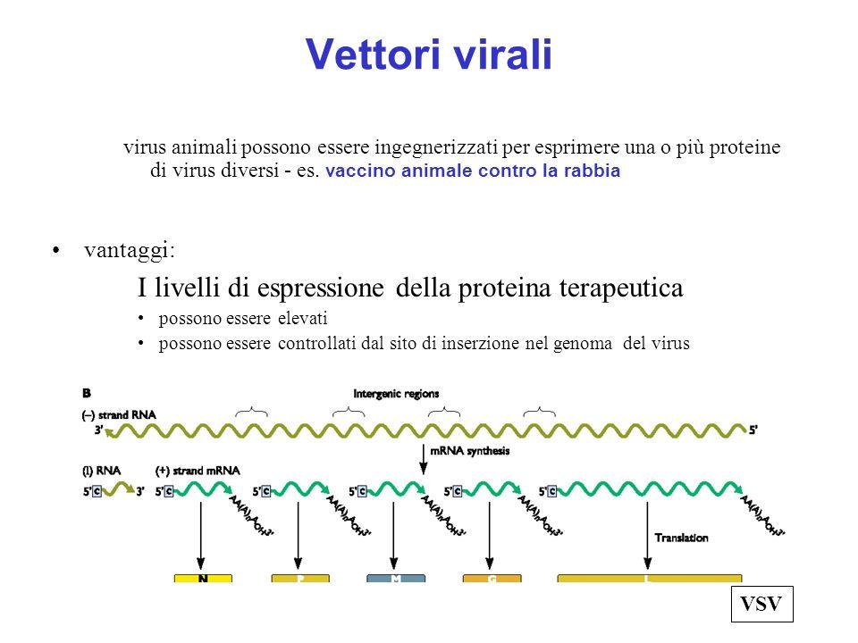 Vettori virali virus animali possono essere ingegnerizzati per esprimere una o più proteine di virus diversi - es. vaccino animale contro la rabbia va