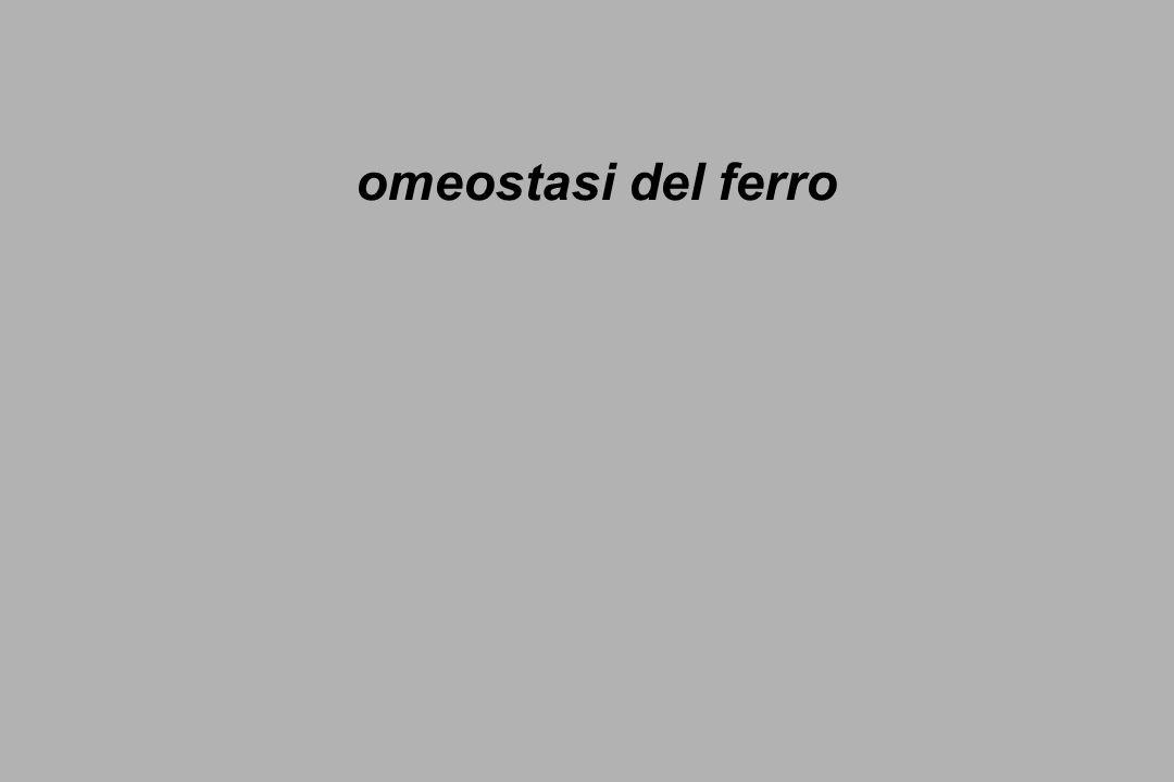 omeostasi del ferro