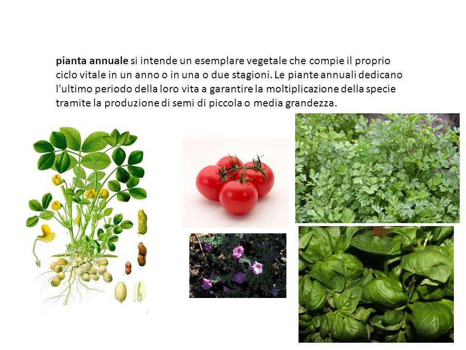 Le piante annuali crescono, fioriscono e muoiono nell arco di un anno, mentre quelle perenni riescono a sopravvivere all inverno per crescere e fiorire anche l anno successivo.