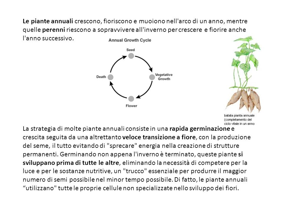 Le piante annuali crescono, fioriscono e muoiono nell'arco di un anno, mentre quelle perenni riescono a sopravvivere all'inverno per crescere e fiorir