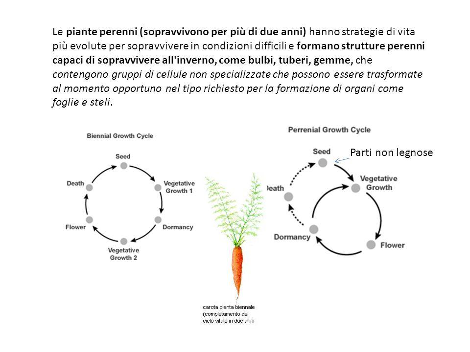 Monocarpiche: piante che fioriscono e fruttificano una volta e poi muoiono.