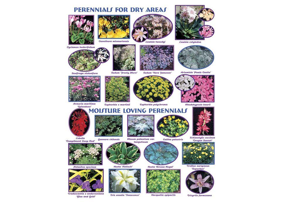 PIANTE ANNUALI: che svolgono tutto il loro ciclo vitale, dalla germinazione del seme allo sviluppo della pianta, alla fioritura, fruttificazione e maturazione dei semi, in una sola stagione e poi muoiono.