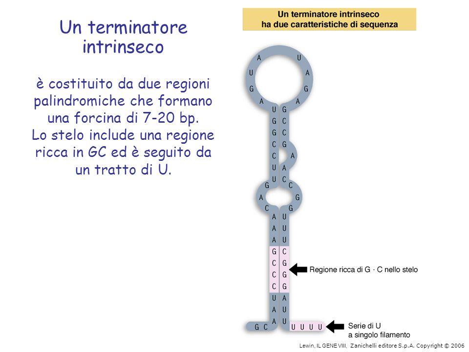Un terminatore intrinseco è costituito da due regioni palindromiche che formano una forcina di 7-20 bp. Lo stelo include una regione ricca in GC ed è