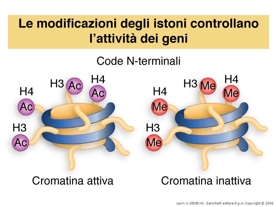 Nei batteri la trascrizione e la traduzione sono accoppiate