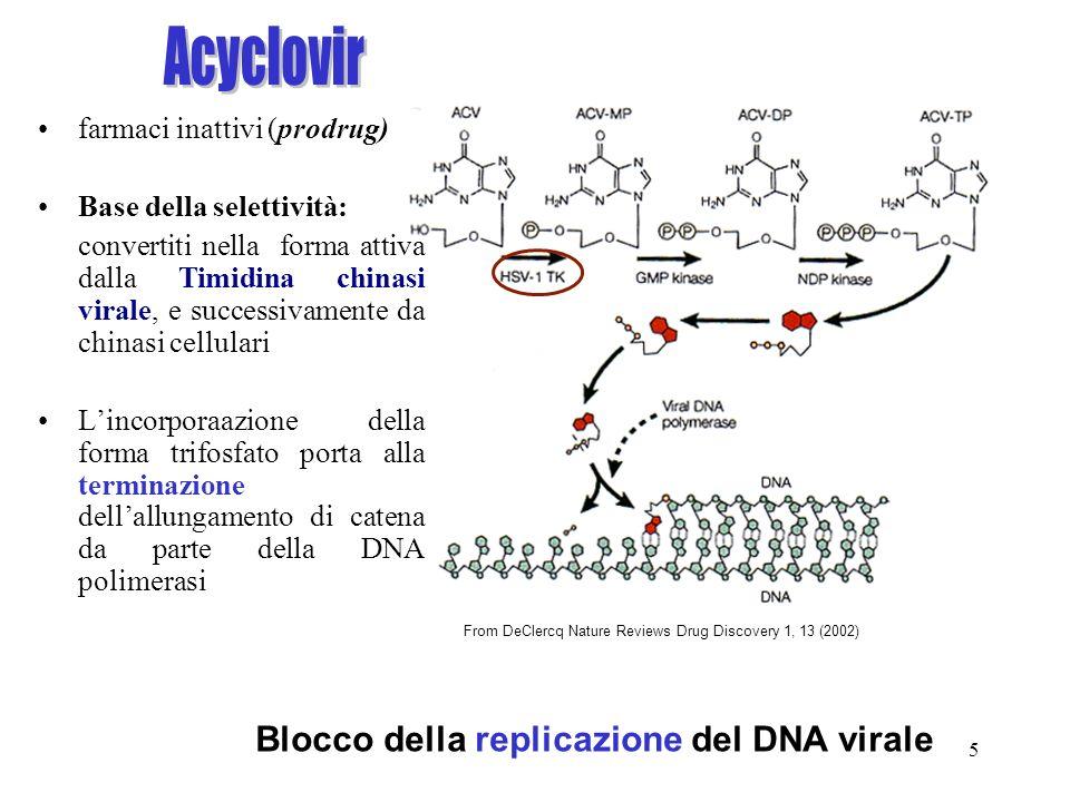 5 From DeClercq Nature Reviews Drug Discovery 1, 13 (2002) Blocco della replicazione del DNA virale farmaci inattivi (prodrug) Base della selettività: convertiti nella forma attiva dalla Timidina chinasi virale, e successivamente da chinasi cellulari Lincorporaazione della forma trifosfato porta alla terminazione dellallungamento di catena da parte della DNA polimerasi