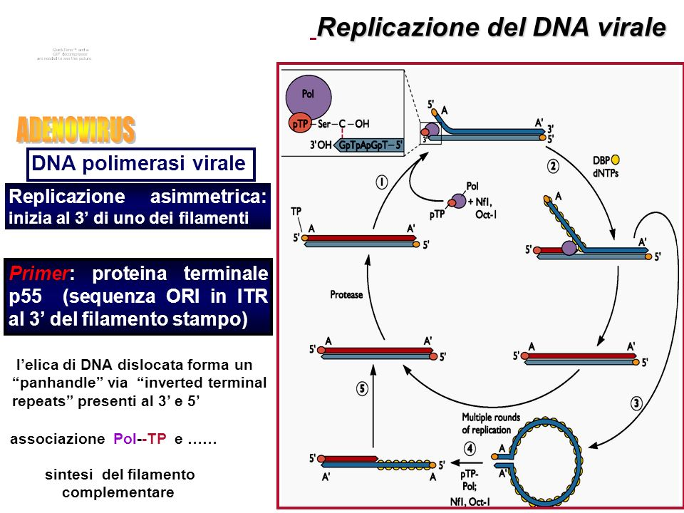 18 VLP vaccini profilattici basati su HPV VLPs bivalente Cervarix azione crociata verso HPV 45 e 31 L1 espresse in Saccaromyces Cerevisiae Adiuvante :Sali di alluminio Efficaci al 100% sullincidenza di lesioni CIN2/ 3 pre-cancerose Efficaci al 99% sulla protezione da condilomi quadrivalente L1 espresse in Baculovirus adiuvante :Sali di alluminio