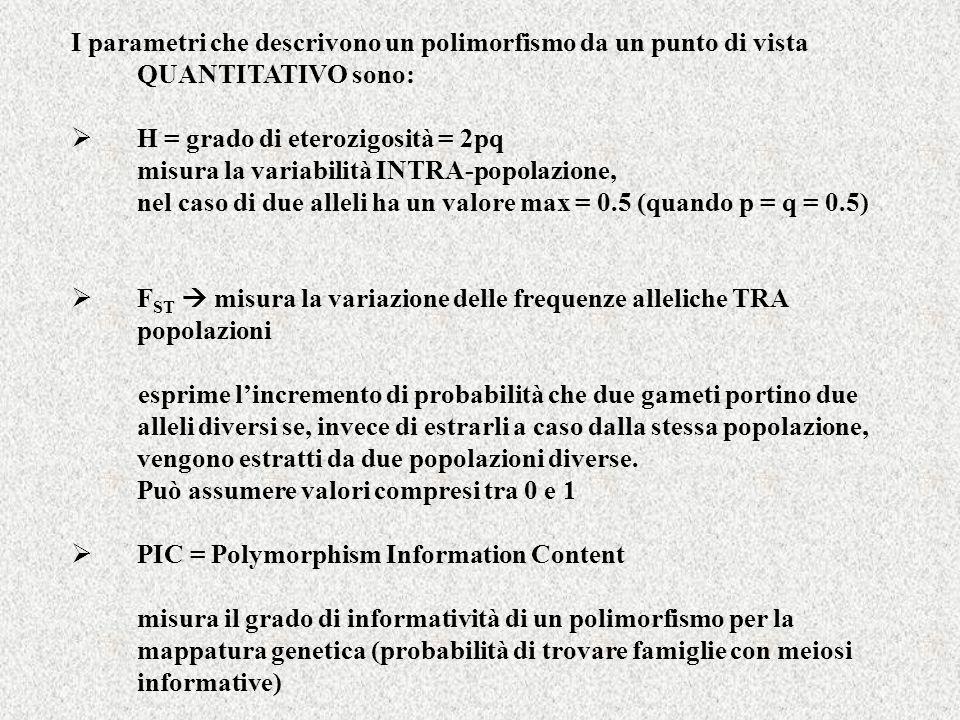 CRITERI DI CLASSIFICAZIONE DEI POLIMORFISMI GENETICI (alcuni esempi) materiale biologico su cui li si studia livello di analisi metodo di analisi base molecolare valore selettivo grado di variabilità (intra- ed inter-popolazioni) diffusione geografica tipo di trasmissione (classica o uniparentale) tasso di mutazione