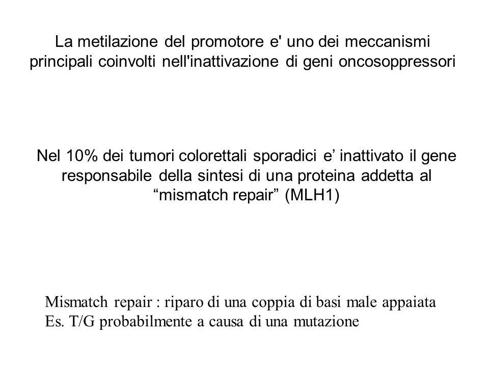 La metilazione del promotore e' uno dei meccanismi principali coinvolti nell'inattivazione di geni oncosoppressori Nel 10% dei tumori colorettali spor