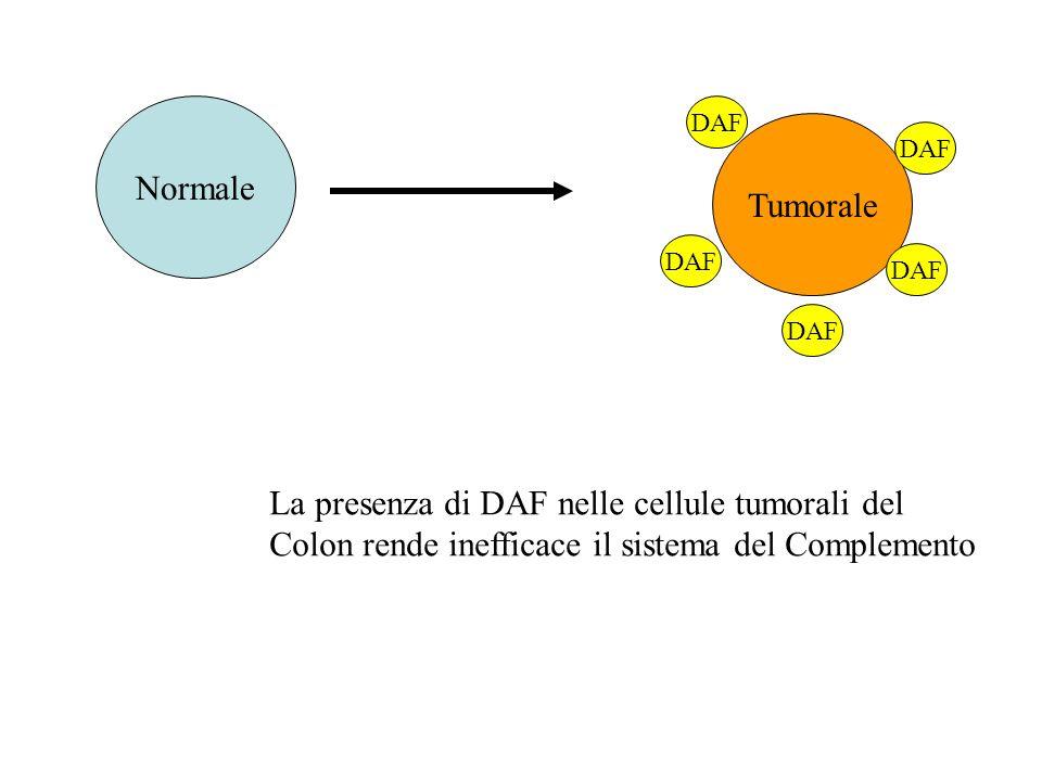 Normale Tumorale DAF La presenza di DAF nelle cellule tumorali del Colon rende inefficace il sistema del Complemento