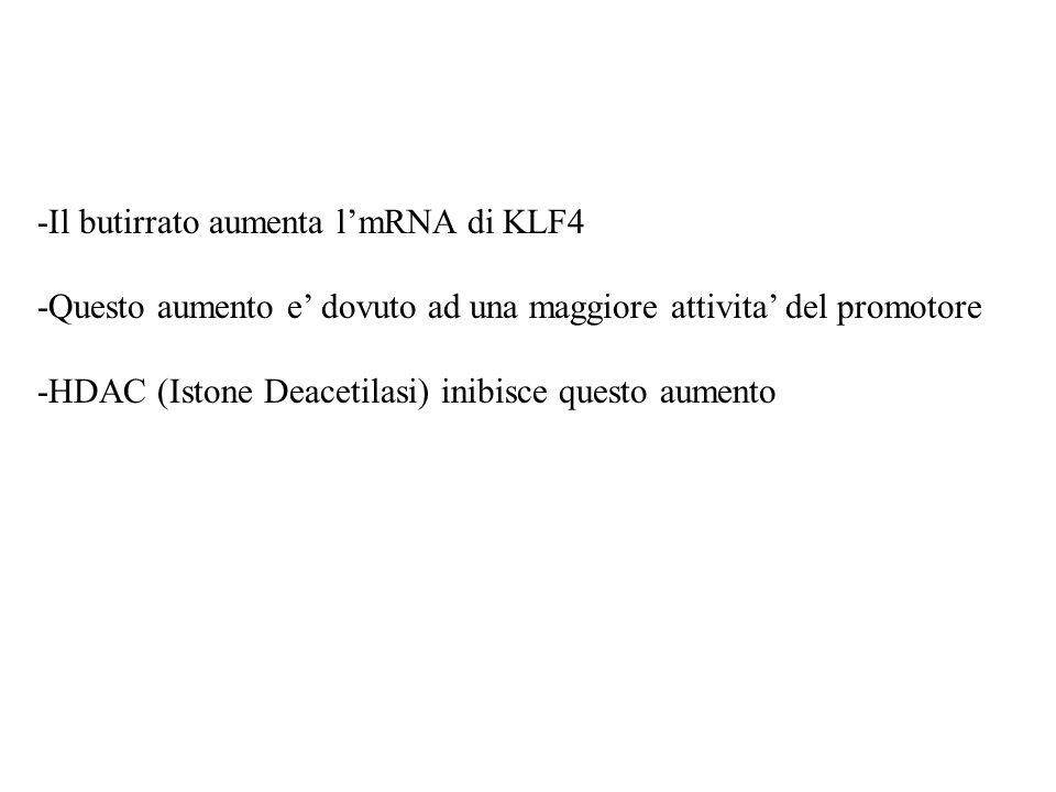 -Il butirrato aumenta lmRNA di KLF4 -Questo aumento e dovuto ad una maggiore attivita del promotore -HDAC (Istone Deacetilasi) inibisce questo aumento