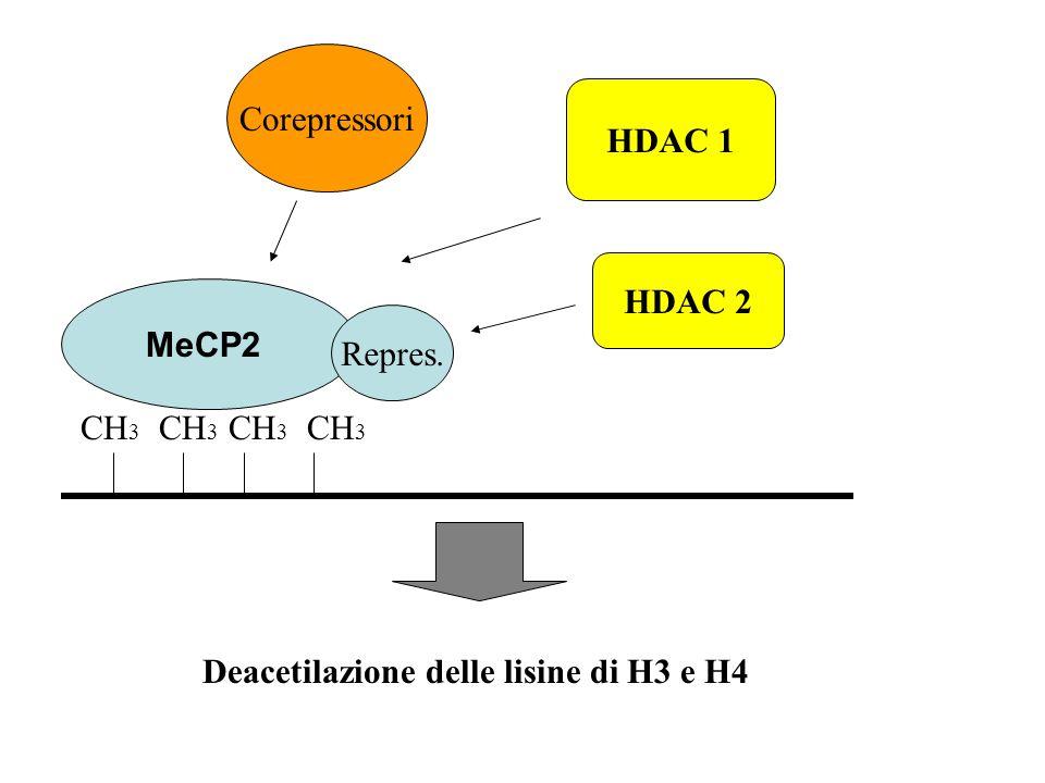 CH 3 MeCP2 Repres. Corepressori HDAC 1 HDAC 2 Deacetilazione delle lisine di H3 e H4