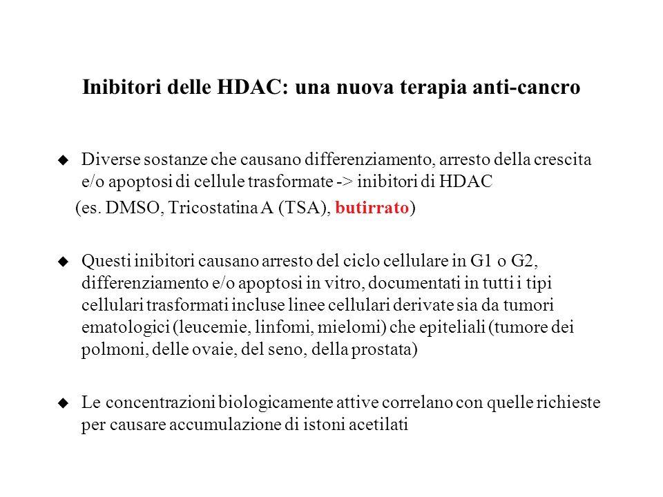 Inibitori delle HDAC: una nuova terapia anti-cancro u Diverse sostanze che causano differenziamento, arresto della crescita e/o apoptosi di cellule tr