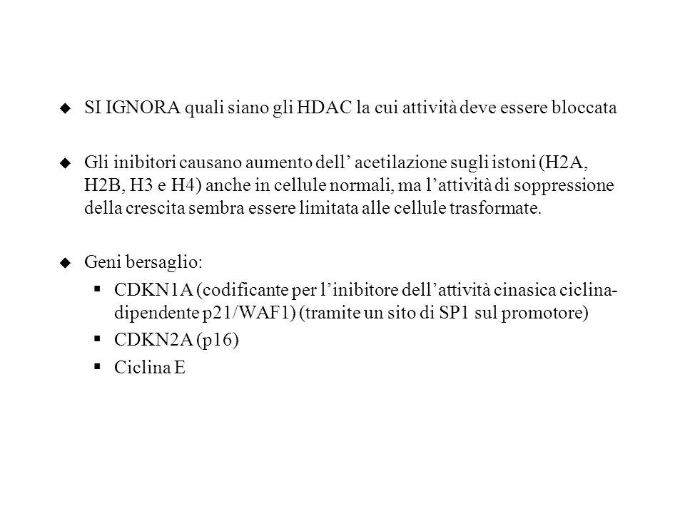 u SI IGNORA quali siano gli HDAC la cui attività deve essere bloccata u Gli inibitori causano aumento dell acetilazione sugli istoni (H2A, H2B, H3 e H