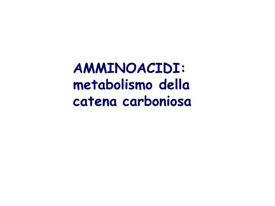 AMMINOACIDI: metabolismo della catena carboniosa