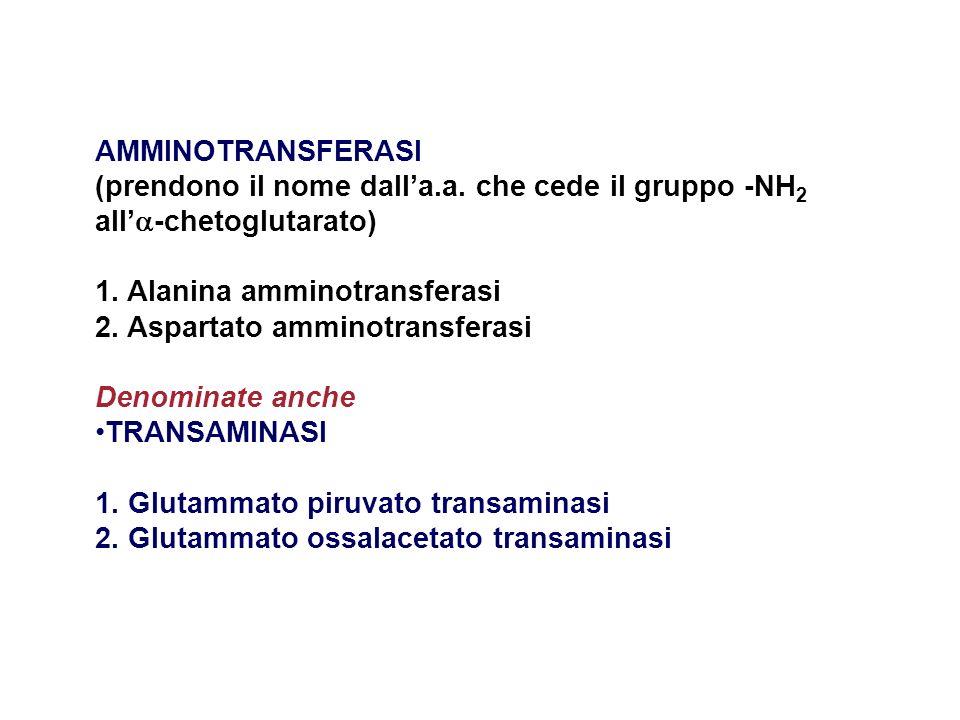 AMMINOTRANSFERASI (prendono il nome dalla.a. che cede il gruppo -NH 2 all -chetoglutarato) 1. Alanina amminotransferasi 2. Aspartato amminotransferasi
